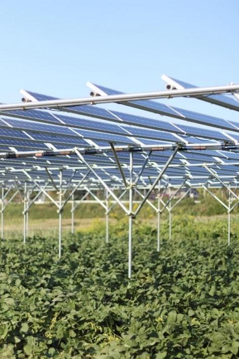 太陽の光を作物と発電にシェアする仕組み
