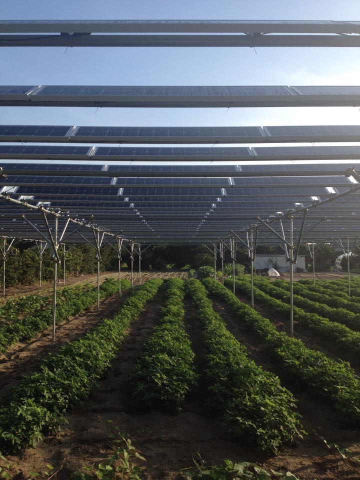 千葉県大網白里市にある光太陽農園(©市民エネルギーちば)