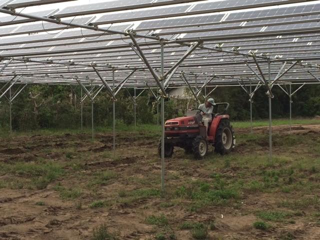 トラクターでの作業でも架台は邪魔にならない。光太陽農園にて(©東光宏)