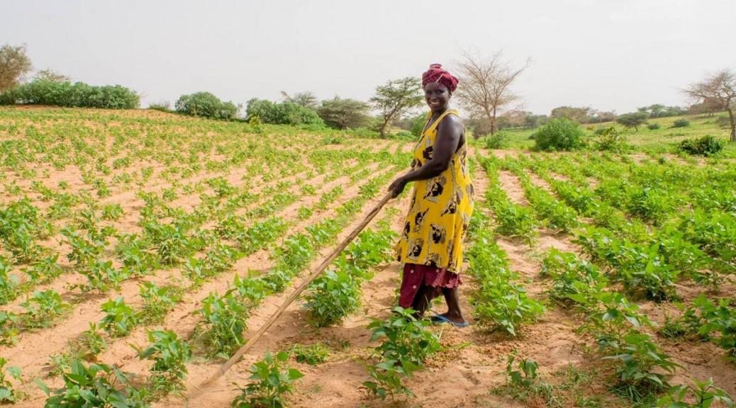 畑仕事をする女性。