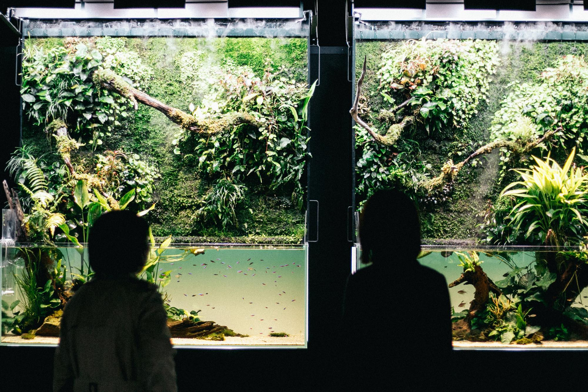生前の天野さんが考案していた「壁面緑化」を、現ADAのクリエイティビティで具現化した<巨大ネイチャー水草ウォール>は絶対に見て欲しい。『天野尚 NATURE AQUARIUM展』にて展示中。